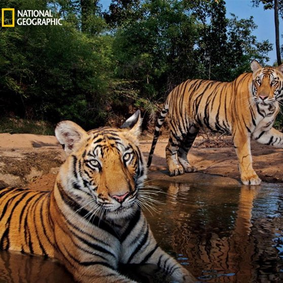Voix off pour National Geographic